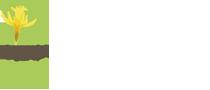 Logo Narcisse Jaune